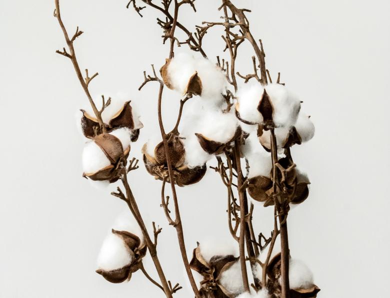 Szwedzkie nazwy kwiatów
